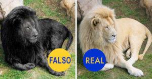 15 fotos virales que son verdadero 'fake' de Internet