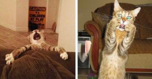 10 Gatos tan dramáticos que  tienen bien merecido un Oscar
