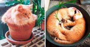 15 Gatos-plantas para decorar tu jardín o tu oficina