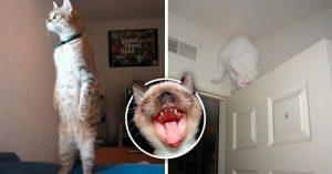15 Gatos que olvidaron cómo ser gatos e ignoraron todos sus instintos salvajes
