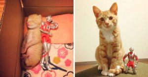 Ultraman cuidó a este gatito desde bebé, ahora son inseparables