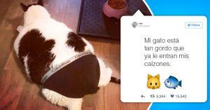 20 Divertidos tuits protagonizados por mascotas que seguro alegrarán tu día