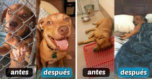 15 Fotos de perritos ANTES y DESPUÉS de ser rescatados de la perrera