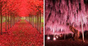 16 Árboles tan bellos que querrás abrazarlos en este instante