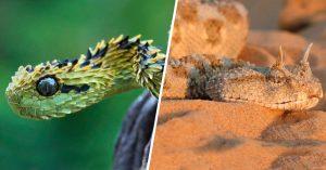 15 Especies de serpientes que no querrás encontrarte; son las más aterradoras