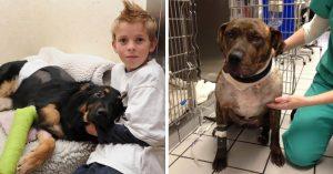 15 perritos heroicos y extraordinarios que sorprendieron a la humanidad