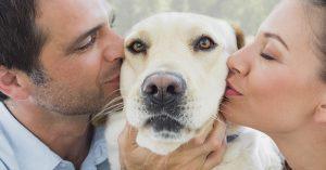 15 Confesiones que todo amante canino se niega a aceptar publicamente