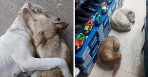 Zapatería permite que los perros callejeros se resguarden de la lluvia