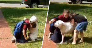 Perrito pitbull de tres patas espera por horas a su dueño y cuando lo ve de nuevo lo abraza