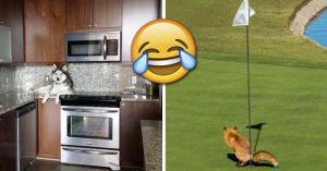 20 Animales desobedientes que hacen lo que les da la gana