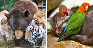20 Veces que la naturaleza nos sorprendió con amistades singulares