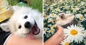 15 Fotos de animales tiernos que pondrán de buenas hasta a los más amargados