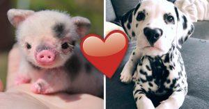20 Animalitos bebé que te harán olvidar por un instante a tu ex