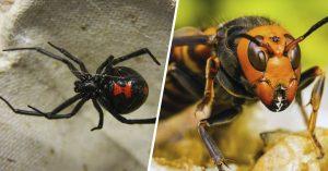 10 Insectos con la picadura MÁS LETAL de todo el planeta