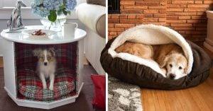 20 Originales diseños de camas para perros que te encantarán