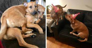 """Perro encontró a su """"gemelo"""" y convence a su dueña de adoptarlo"""