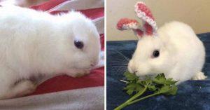 """Conejita nació sin orejas y su dueña le hace las """"prótesis"""" más adorables"""