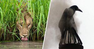"""25 Imágenes que participaron en el concurso """"Fotógrafo de la vida silvestre 2018"""""""