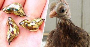 9 Animales tan extraños que seguramente no sabías que existían