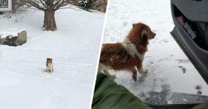 Perrita abandonada espera 5 días en el frío a que su familia regrese