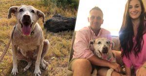 Después de pasar 7 años en el albergue esta perrita encontró una familia que la ama