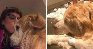 Emotiva despedida; acaricia a su perro y le canta hasta que él muere