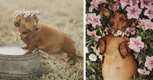 Perrita embarazada protagoniza la sesión fotográfica más tierna del año