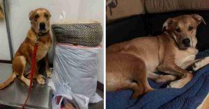 Familia abandona a perrito en el mismo albergue en el que lo adoptaron