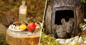 Fotógrafo encuentra ratones en su jardín y les construye un adorable refugio