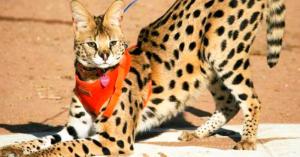 15 Animales exóticos que algunas personas INCONSCIENTES tienen como mascotas