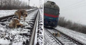El amigo más fiel; perro protege a su compañera herida de un tren en marcha