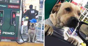 Héroe de cuatro patas; valiente perrito impide asalto en gasolinera