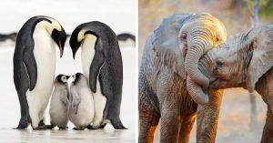 15 Parejas de animales enamorados que derretirán tu corazón de hielo