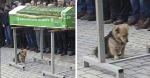 Cesur, el Hachiko de Turquía que visita la tumba de su dueño todos los días