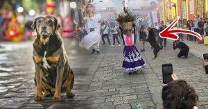 Descubre quién es Mazapán, el perrito que ya es ícono cultural en su tierra