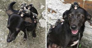 Perrita adopta a zarigüeyas huérfanas, es una madre ejemplar