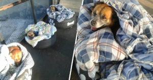Estación de autobuses les hizo camitas con llantas recicladas a los perritos de la calle