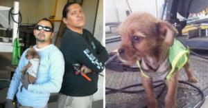 Trabajadores adoptan a cachorro arrojado desde un auto en movimiento