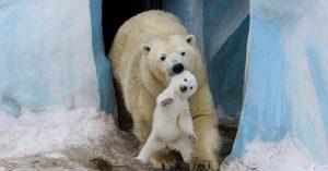 Los Momentos Más Bellos Captados sobre La Parentalidad del Reino Animal