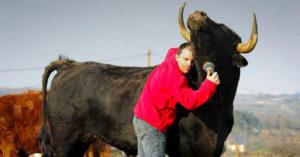 Adoptó un toro de corridas y le demostró al mundo que se trata de un deporte cruel
